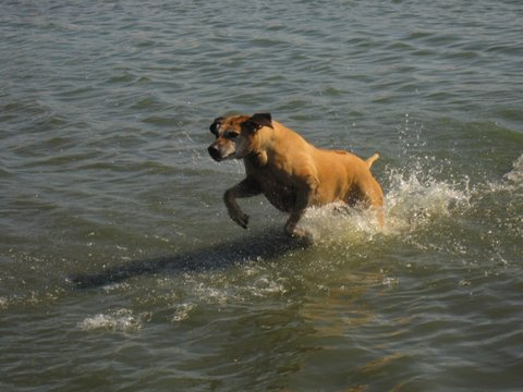 Fury (1997-2011) powers through the water.
